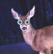 Image result for pictures of deers in the headlights