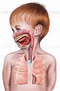 Resultado de imagem para oral breathing in children