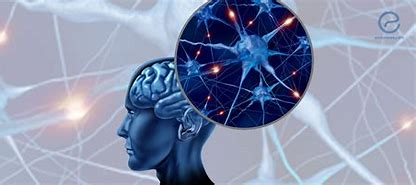 Image result for hormones and brain function