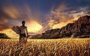 Image result for harvest images