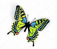 Résultat d'images pour illustrations papillons