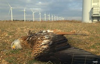 Image result for Eagles Killed by Wind Turbines