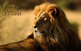 Image result for free pictures lion of judah