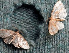 Image result for moth eating away pics