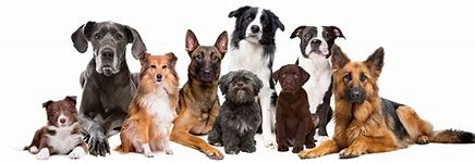 Image result for Free Pet Images