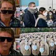 Image result for idiotic people behaving like sheep