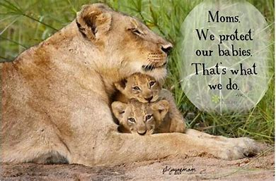Image result for free pics mama bear protection