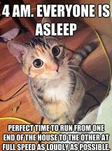Image result for Human Funny Cat Memes