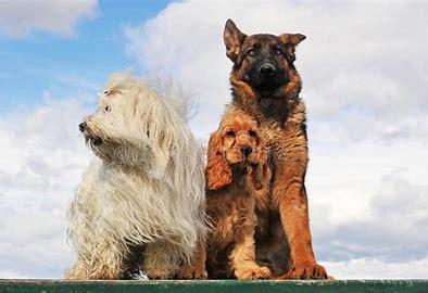 Bildergebnis für drei hunde