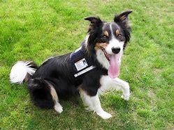 Image result for service dog vest with id holder