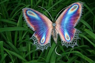 Image result for Real Purple Butterflies