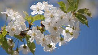 Nalezený obrázek pro jaro  obrázky