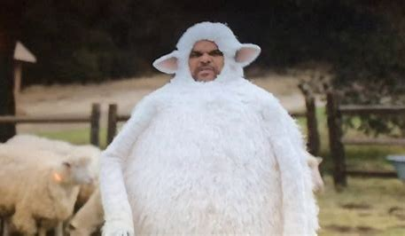 Image result for images of stupid people acting like sheep