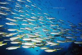 魚群 に対する画像結果