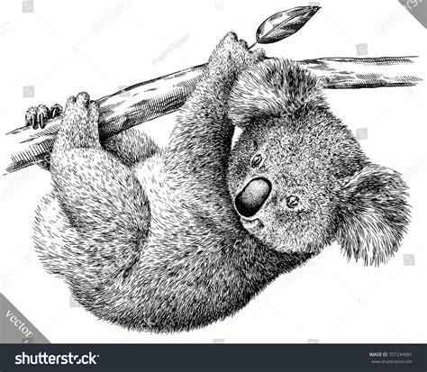 black white engrave isolated koala vector stock vector