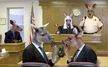 Image result for images university sexual kangaroo courts