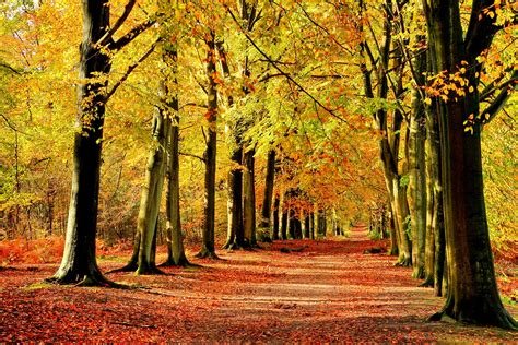 forest free stock photos road widescreen path desktop