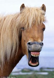 Image result for Smiling Horse Face