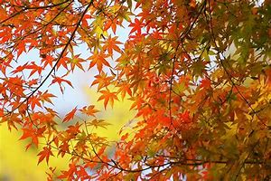 秋 フリー素材 に対する画像結果