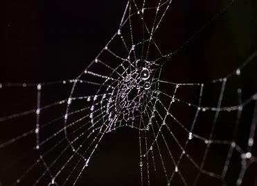Image result for images of a web of lies