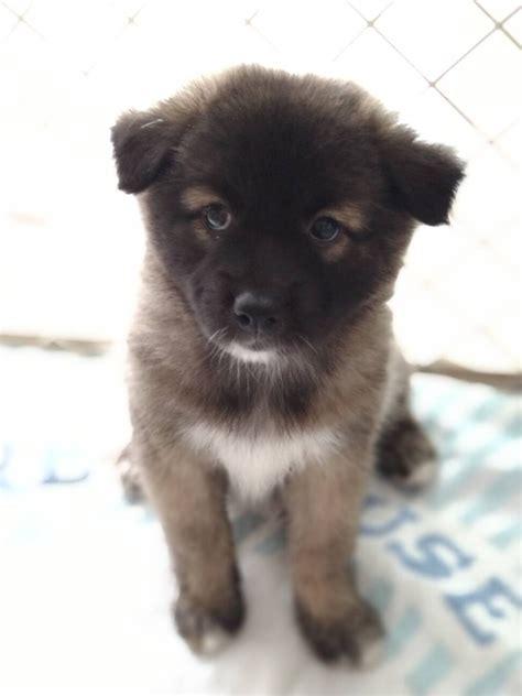 里親 福岡 子犬 福岡県の子犬 里親募集 ジモティー