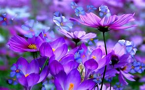 Image result for free pics of flowers
