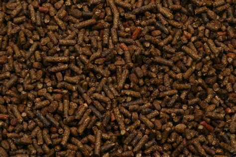 FIVE MYTHS OF HORSE NUTRITION THE FEED ROOM