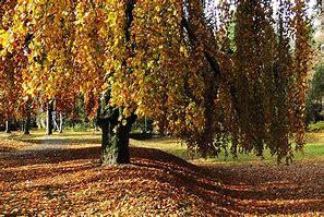 Nalezený obrázek pro Obrazky Podzim