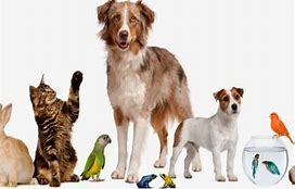 Image result for pet images