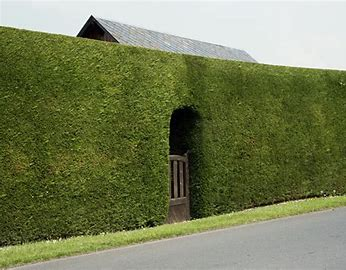 Image result for hedge public domain
