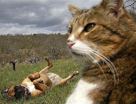 猫 面白い に対する画像結果