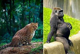 Afbeeldingsresultaten voor foto wilde dieren