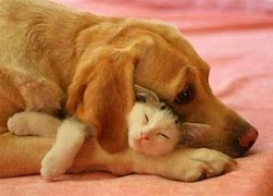 Image result for free pics of  cats and dogs