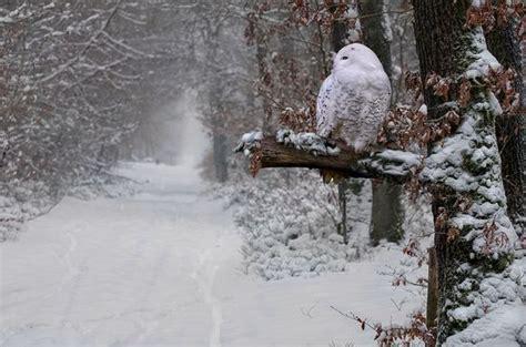 Résultat d'images pour belle image de neige