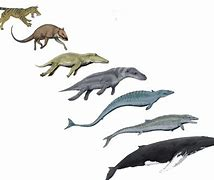 Image result for origin of whales darwin