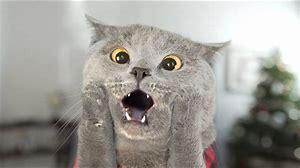 Résultat d'images pour image drôle de chat