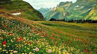 Obraz znaleziony dla: łąka kwietna
