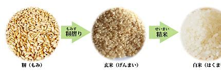 玄米とは  に対する画像結果