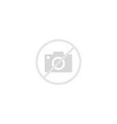 Image result for Gene Ammons The boss is back