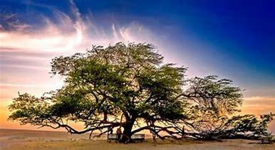 Resultado de imagen de imágenes de esqueje de árbol milenario