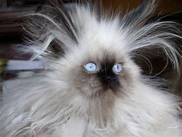 Image result for free pics of animals bad hair day