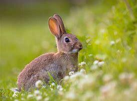 Résultat d'images pour image de lapin mignon