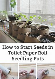 Image result for seeds on toilet rolls beanstal