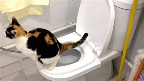 Don't Toilet Train Your Cat
