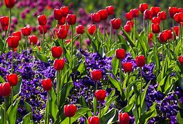 Image result for free pics of plant in bloom