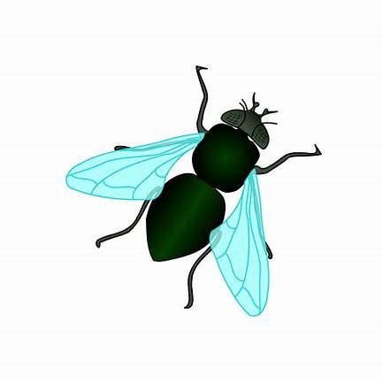 Image result for fly clipart