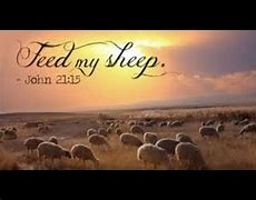 Image result for free pics of feed my sheep