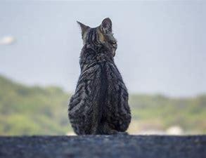 孤独の猫 に対する画像結果