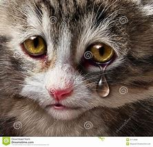 Image result for free pics of animals crying