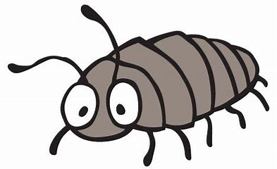 Image result for woodlouse clip art